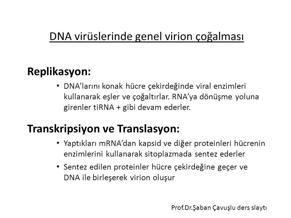 DNA virüslerinde genel virion çoğalması Replikasyon: DNA'larını konak hücre çekirdeğinde viral enzimleri kullanarak eşler ve çoğaltırlar. RNA'ya dönüş