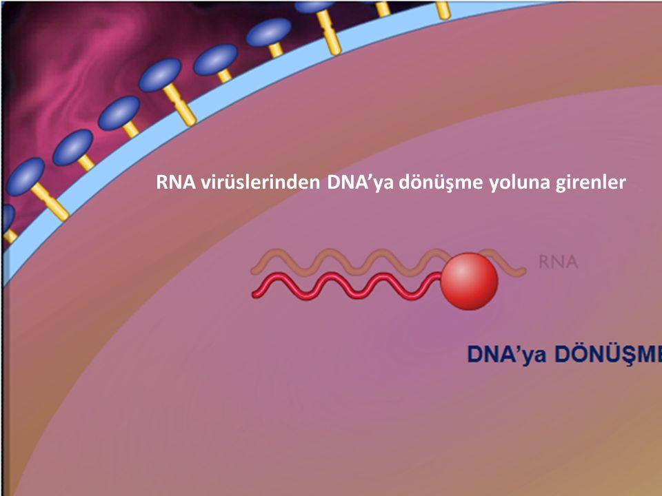 33 RNA virüslerinden DNA'ya dönüşme yoluna girenler