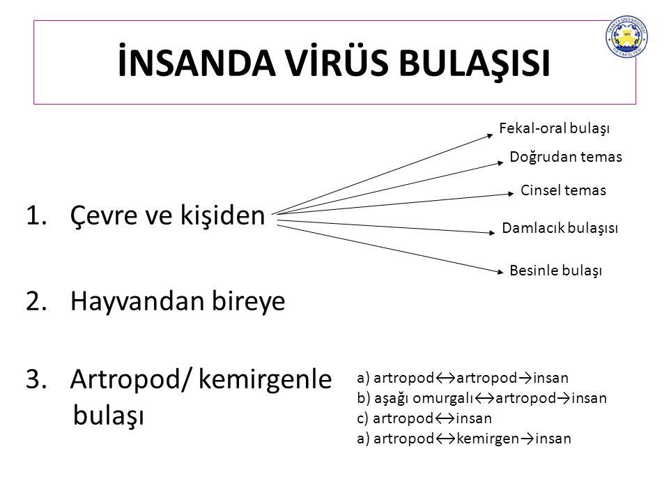 VİRÜSLERDE EK YAPILAR Enzimler (membran eritmek, konak makinalarının kontrolü, konak genomuna entegrasyon, viral kromozom eşlenmesi, vb..