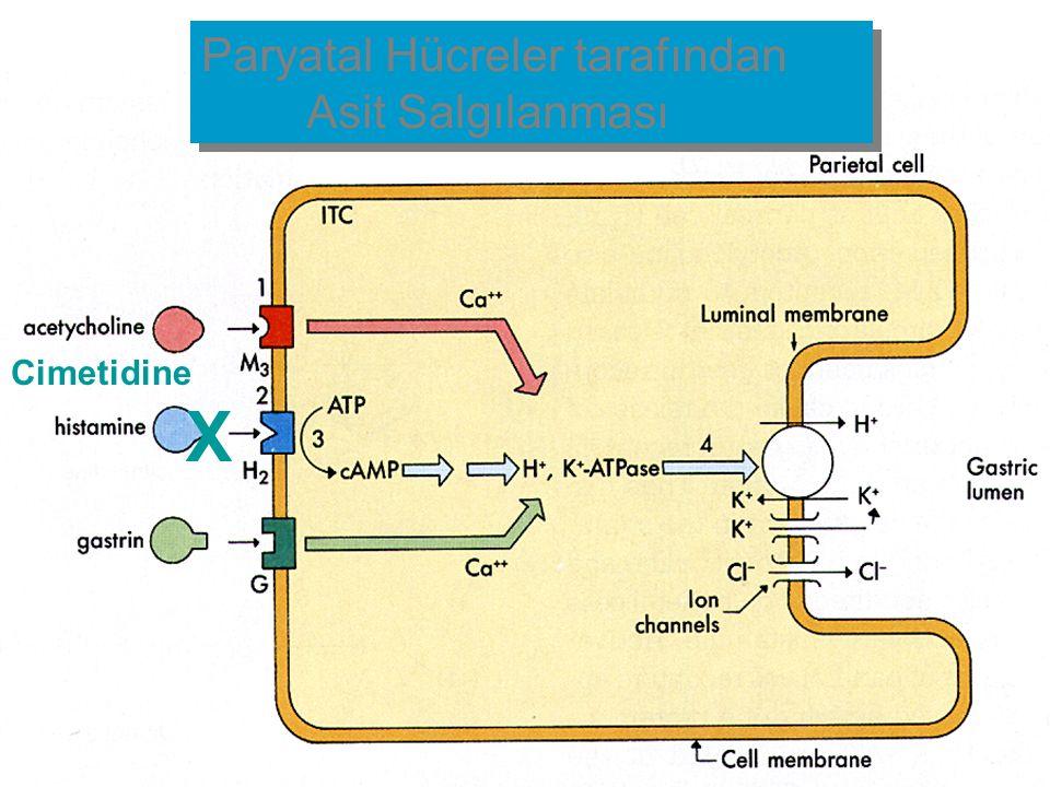 Cimetidine X Paryatal Hücreler tarafından Asit Salgılanması