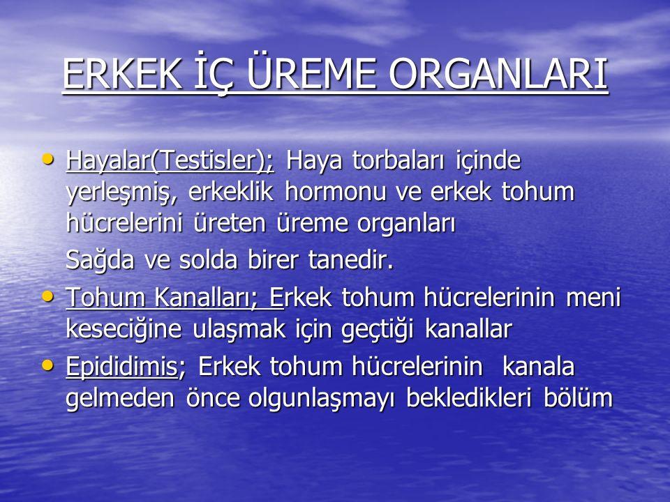 ERKEK İÇ ÜREME ORGANLARI Hayalar(Testisler); Haya torbaları içinde yerleşmiş, erkeklik hormonu ve erkek tohum hücrelerini üreten üreme organları Hayal