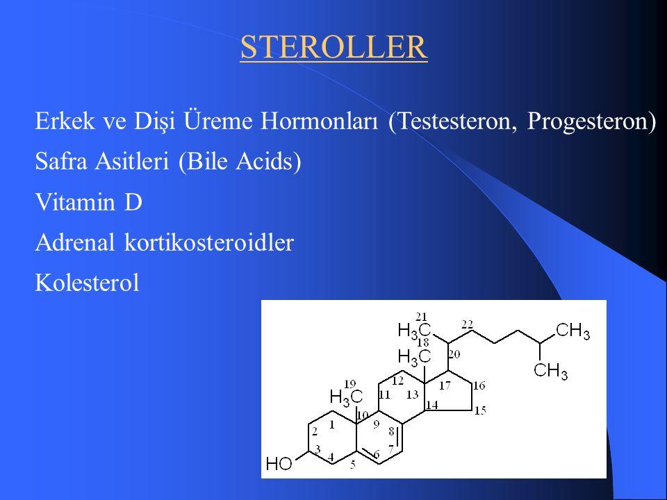 STEROLLER Erkek ve Dişi Üreme Hormonları (Testesteron, Progesteron) Safra Asitleri (Bile Acids) Vitamin D Adrenal kortikosteroidler Kolesterol