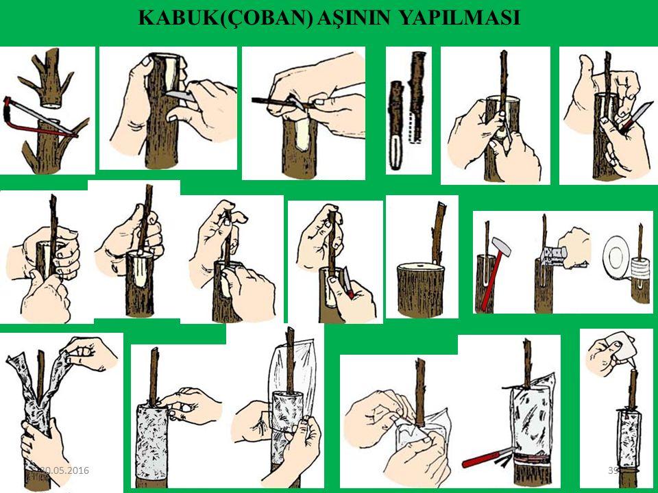 Kakma Aşı Bu aşı, çeşit değiştirme amacıyla 7-10 cm veya daha kalın çaplı dalların aşılanmasında, yarma aşının yerine kullanılır.