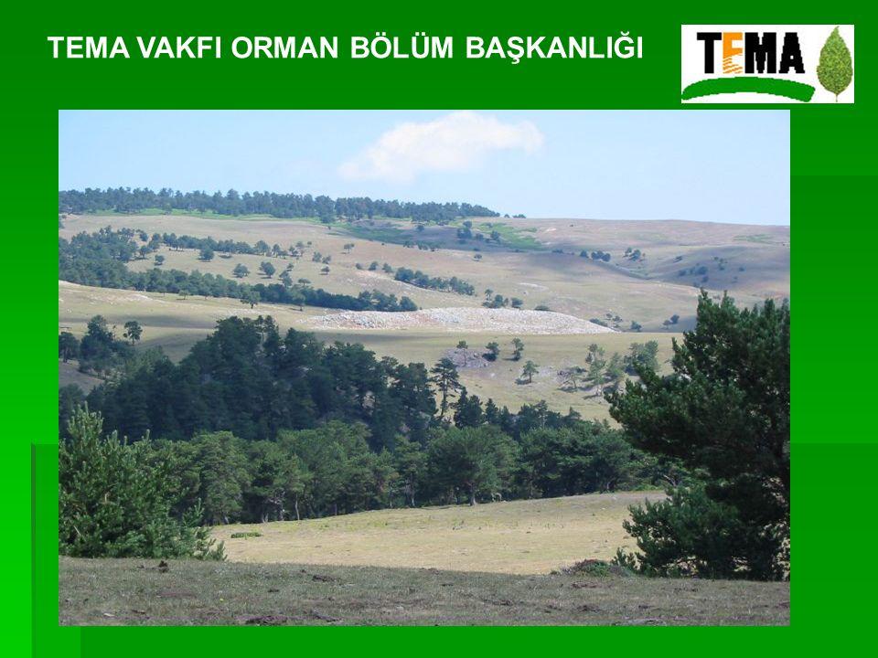 TEMA Vakfı ormanların özelleştirilmesine ve özel işletmeler tarafından ormanların işletilmesine karşıdır.