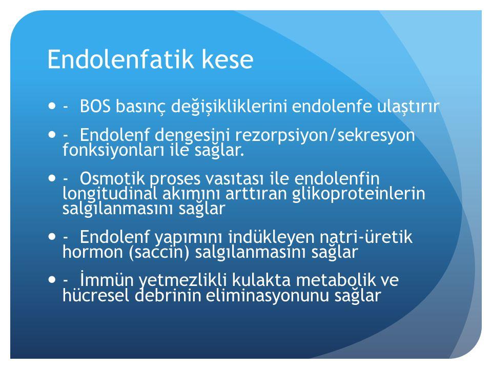 Endolenfatik kanal ve kese Endolenfatik kanal iç kulağın vestibüler ve kohlear kısımlarını duktus reuniens düzeyinde birleştirir.