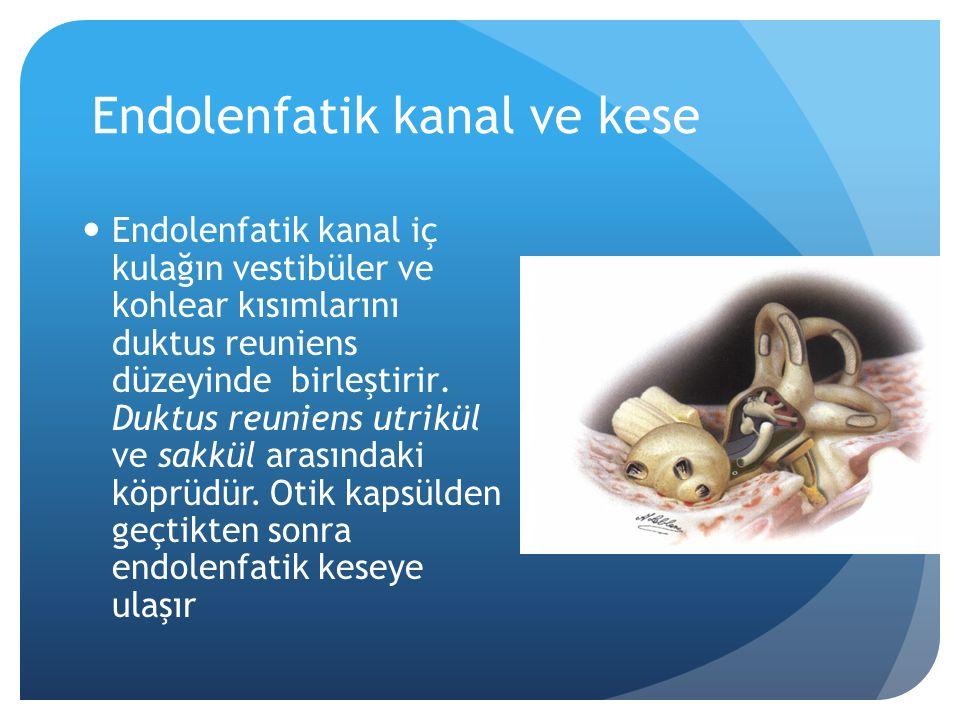 Endolenf yapımı Endolenf yapımı, kohleadaki stria vaskularis, ve semisirküler kanallardaki krista ampullaris ve utrikül tarafından salınan Na/K-ATP ase tarafından regüle edilir.