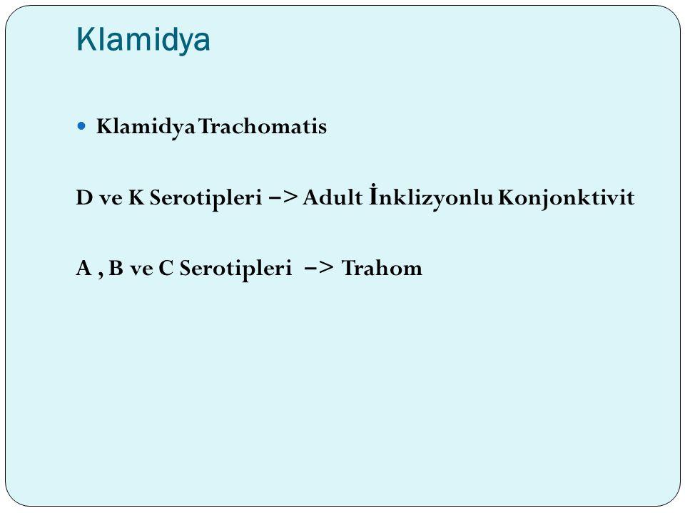 Klamidya Klamidya Trachomatis D ve K Serotipleri ‒ > Adult İ nklizyonlu Konjonktivit A, B ve C Serotipleri ‒ > Trahom