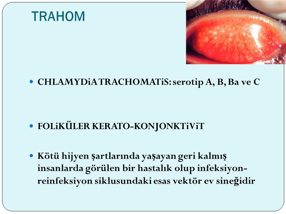 TRAHOM CHLAMYDiA TRACHOMATiS: serotip A, B, Ba ve C FOLiKÜLER KERATO-KONJONKTiViT Kötü hijyen ş artlarında ya ş ayan geri kalmı ş insanlarda görülen b