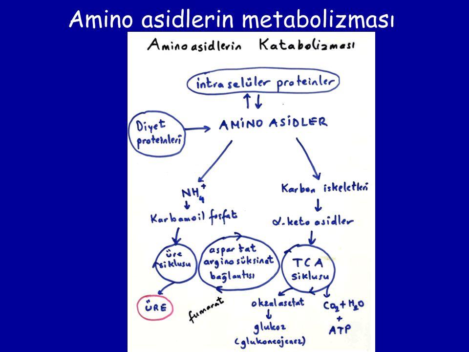 Amino asidlerin metabolizması