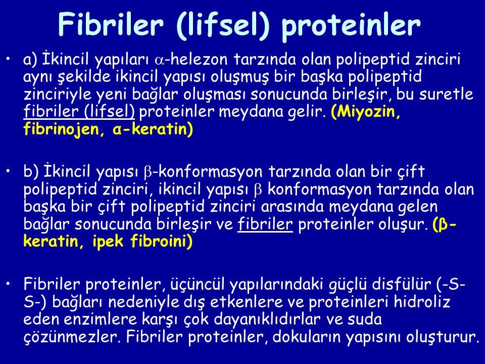 Fibriler (lifsel) proteinler a) İkincil yapıları  -helezon tarzında olan polipeptid zinciri aynı şekilde ikincil yapısı oluşmuş bir başka polipeptid zinciriyle yeni bağlar oluşması sonucunda birleşir, bu suretle fibriler (lifsel) proteinler meydana gelir.