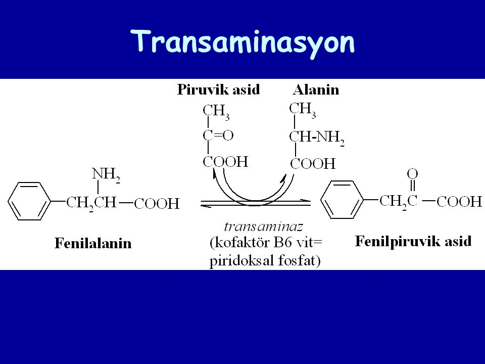 Transaminasyon
