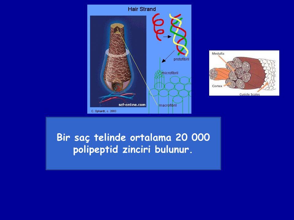 Bir saç telinde ortalama 20 000 polipeptid zinciri bulunur.