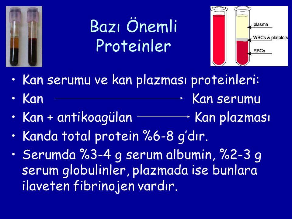 Bazı Önemli Proteinler Kan serumu ve kan plazması proteinleri: Kan Kan serumu Kan + antikoagülan Kan plazması Kanda total protein %6-8 g'dır.