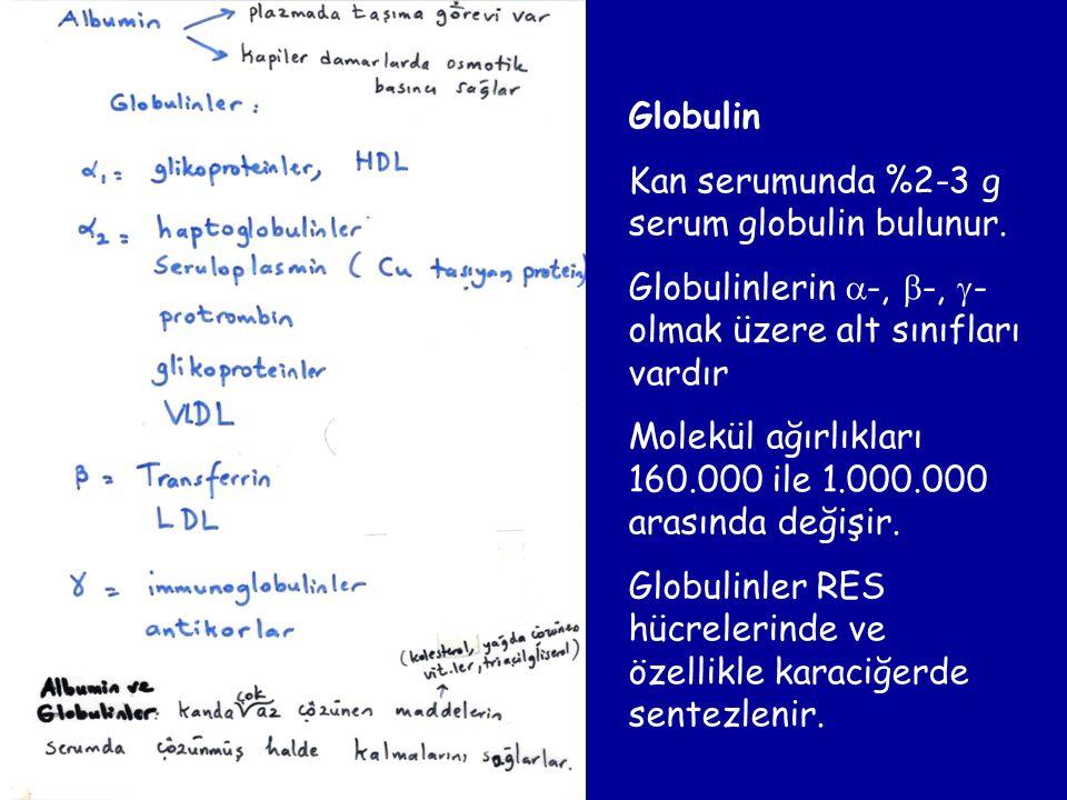 Globulin Kan serumunda %2-3 g serum globulin bulunur. Globulinlerin  -,  -,  - olmak üzere alt sınıfları vardır Molekül ağırlıkları 160.000 ile 1.0