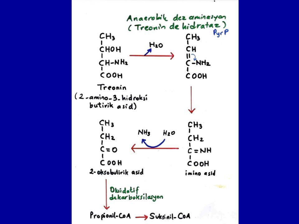 Kollajen moleküllerinde amino asid dizisinin tekrarlayan tripeptid şeklindedir.