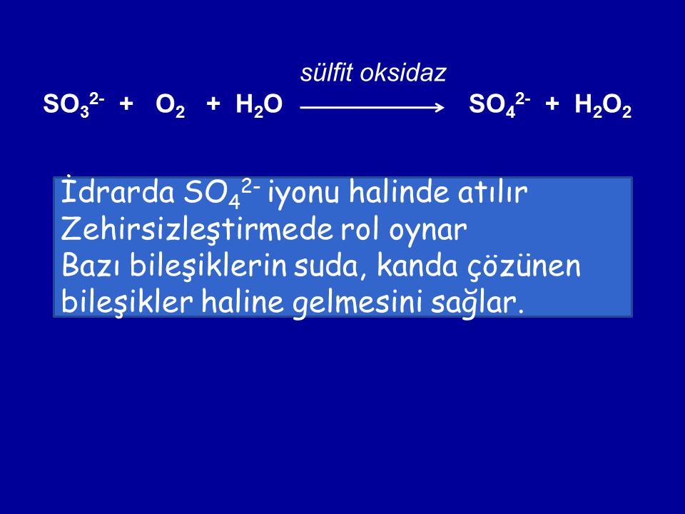 sülfit oksidaz SO 3 2- + O 2 + H 2 O SO 4 2- + H 2 O 2 İdrarda SO 4 2- iyonu halinde atılır Zehirsizleştirmede rol oynar Bazı bileşiklerin suda, kanda çözünen bileşikler haline gelmesini sağlar.