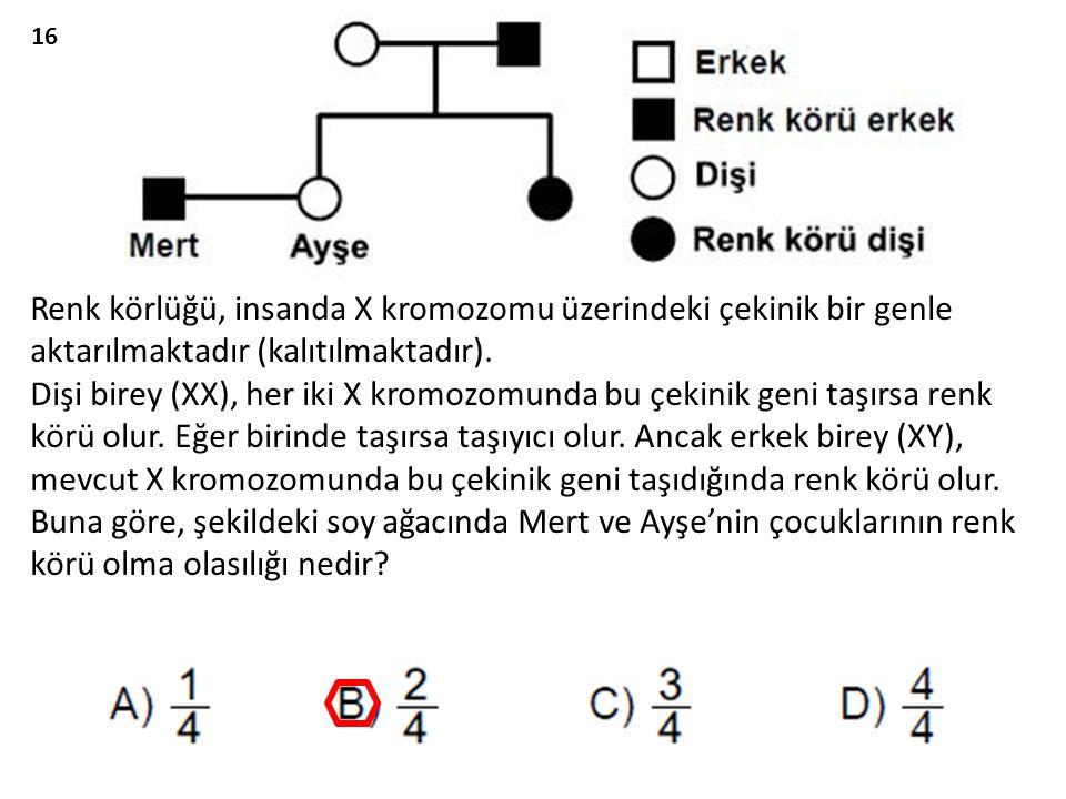 Renk körlüğü, insanda X kromozomu üzerindeki çekinik bir genle aktarılmaktadır (kalıtılmaktadır).