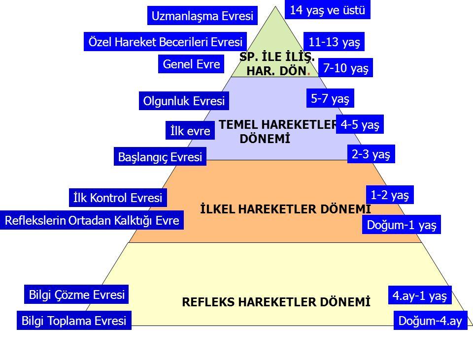 REFLEKS HAREKETLER DÖNEMİ Bilgi Toplama Evresi Bilgi Çözme Evresi İLKEL HAREKETLER DÖNEMİ Reflekslerin Ortadan Kalktığı Evre İlk Kontrol Evresi TEMEL