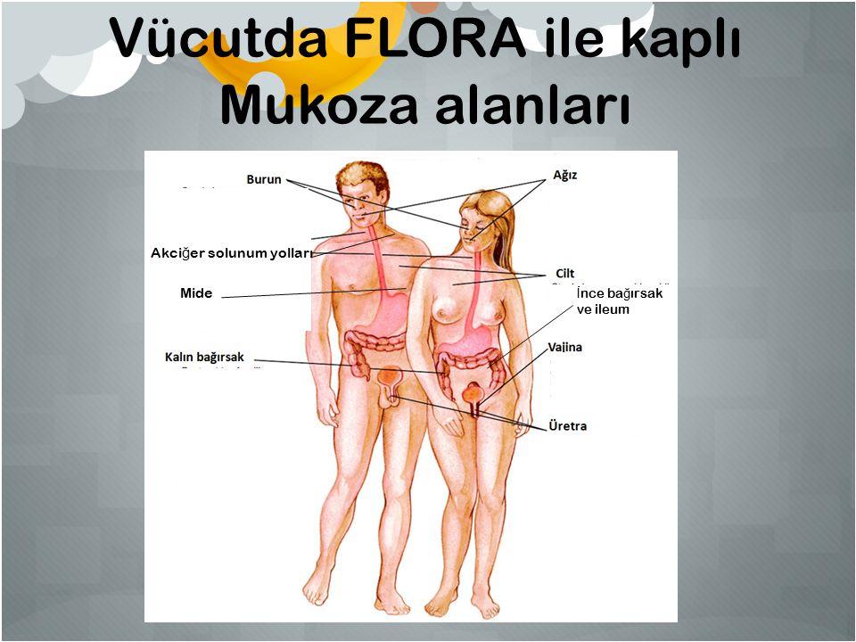 Vücutda FLORA ile kaplı Mukoza alanları Mide İ nce ba ğ ırsak ve ileum Akci ğ er solunum yolları