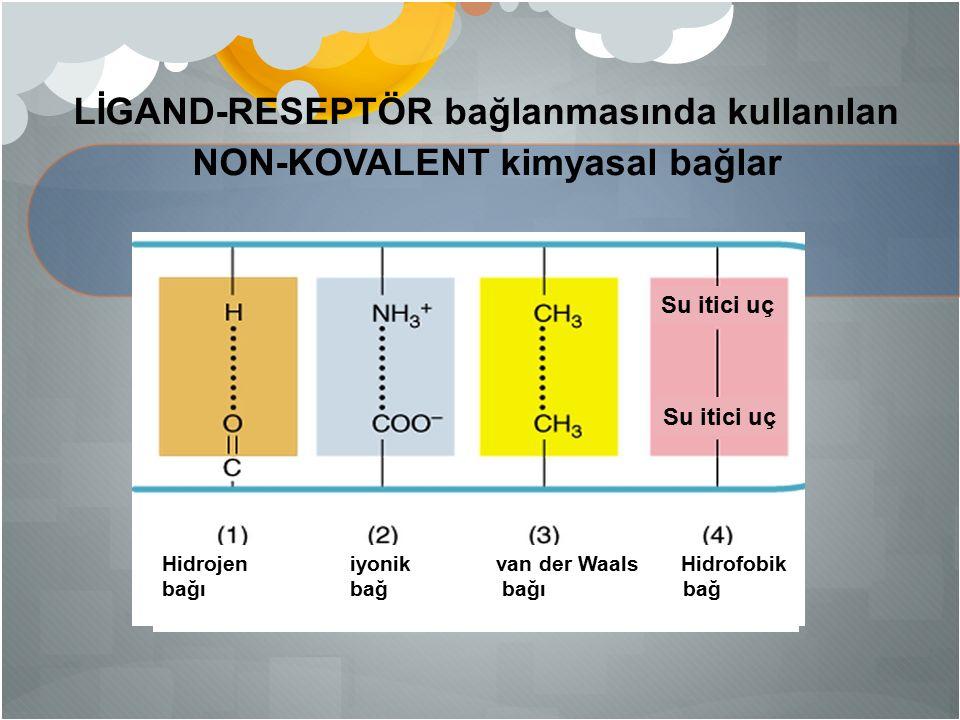 LİGAND-RESEPTÖR bağlanmasında kullanılan NON-KOVALENT kimyasal bağlar Hidrojen iyonik van der Waals Hidrofobik bağı bağ Su itici uç