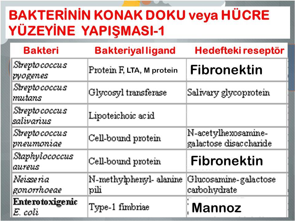 BAKTER İ N İ N KONAK DOKU veya HÜCRE YÜZEY İ NE YAPI Ş MASI-1 Bakteri Bakteriyal ligand Hedefteki reseptör Mannoz Fibronektin, LTA, M protein