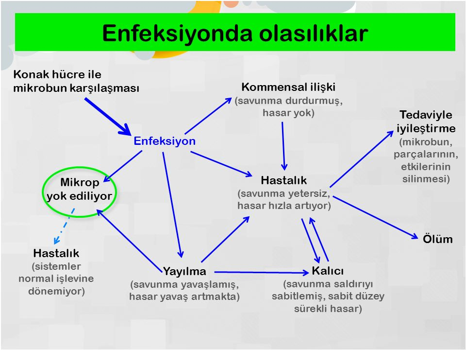 Enfeksiyonda olasılıklar Konak hücre ile mikrobun kar ş ıla ş ması Enfeksiyon Hastalık (savunma yetersiz, hasar hızla artıyor) Mikrop yok ediliyor Yayılma (savunma yava ş lamı ş, hasar yava ş artmakta) Kalıcı (savunma saldırıyı sabitlemi ş, sabit düzey sürekli hasar) Kommensal ili ş ki (savunma durdurmu ş, hasar yok) Tedaviyle iyile ş tirme (mikrobun, parçalarının, etkilerinin silinmesi) Ölüm Hastalık (sistemler normal i ş levine dönemiyor)