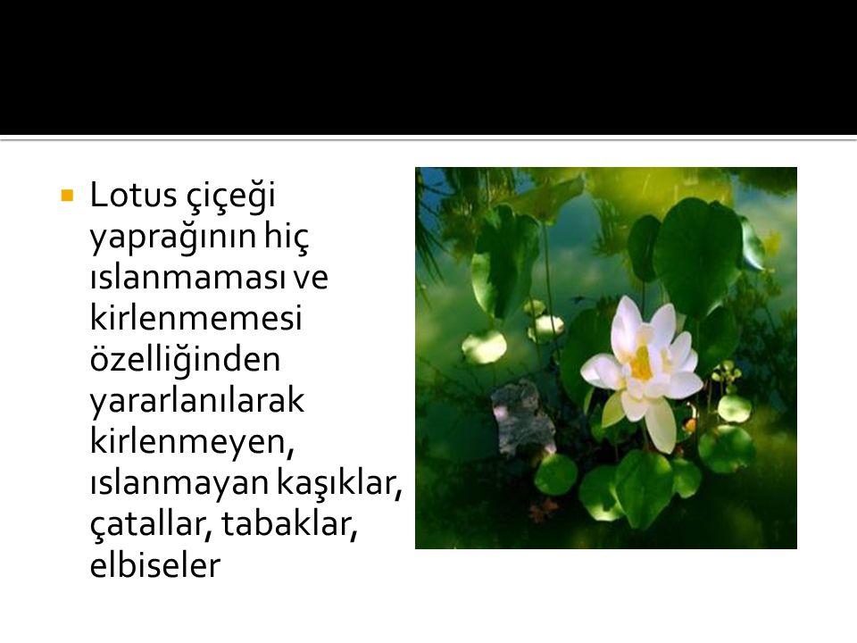  Lotus çiçeği yaprağının hiç ıslanmaması ve kirlenmemesi özelliğinden yararlanılarak kirlenmeyen, ıslanmayan kaşıklar, çatallar, tabaklar, elbiseler