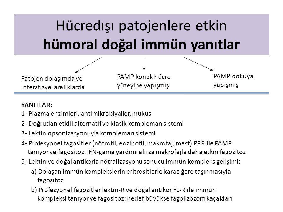 Hücredışı patojenlere etkin hümoral doğal immün yanıtlar Patojen dolaşımda ve interstisyel aralıklarda PAMP konak hücre yüzeyine yapışmış PAMP dokuya yapışmış YANITLAR: 1- Plazma enzimleri, antimikrobiyaller, mukus 2- Doğrudan etkili alternatif ve klasik kompleman sistemi 3- Lektin opsonizasyonuyla kompleman sistemi 4- Profesyonel fagositler (nötrofil, eozinofil, makrofaj, mast) PRR ile PAMP tanıyor ve fagositoz.
