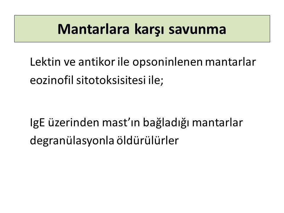 Mantarlara karşı savunma Lektin ve antikor ile opsoninlenen mantarlar eozinofil sitotoksisitesi ile; IgE üzerinden mast'ın bağladığı mantarlar degranülasyonla öldürülürler
