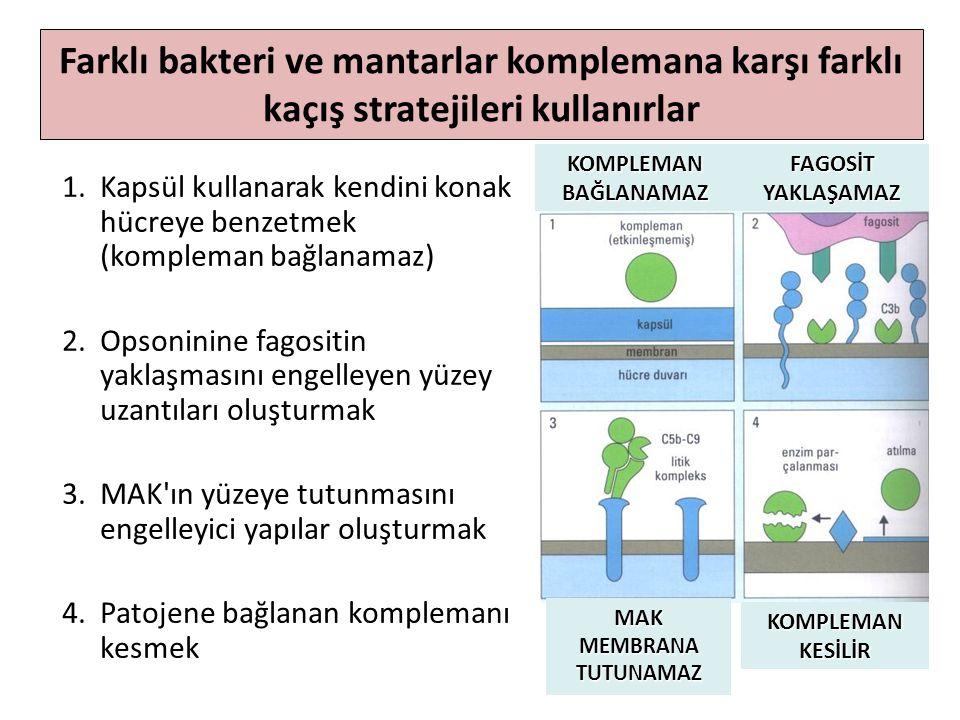 KOMPLEMAN BAĞLANAMAZ FAGOSİT YAKLAŞAMAZ KOMPLEMAN KESİLİR MAK MEMBRANA TUTUNAMAZ 1.Kapsül kullanarak kendini konak hücreye benzetmek (kompleman bağlanamaz) 2.Opsoninine fagositin yaklaşmasını engelleyen yüzey uzantıları oluşturmak 3.MAK ın yüzeye tutunmasını engelleyici yapılar oluşturmak 4.Patojene bağlanan komplemanı kesmek Farklı bakteri ve mantarlar komplemana karşı farklı kaçış stratejileri kullanırlar