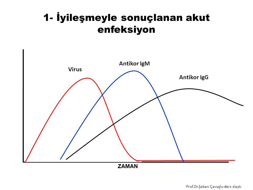 1- İyileşmeyle sonuçlanan akut enfeksiyon Antikor IgM Virus Antikor IgG Prof.Dr.Şaban Çavuşlu ders slaytı