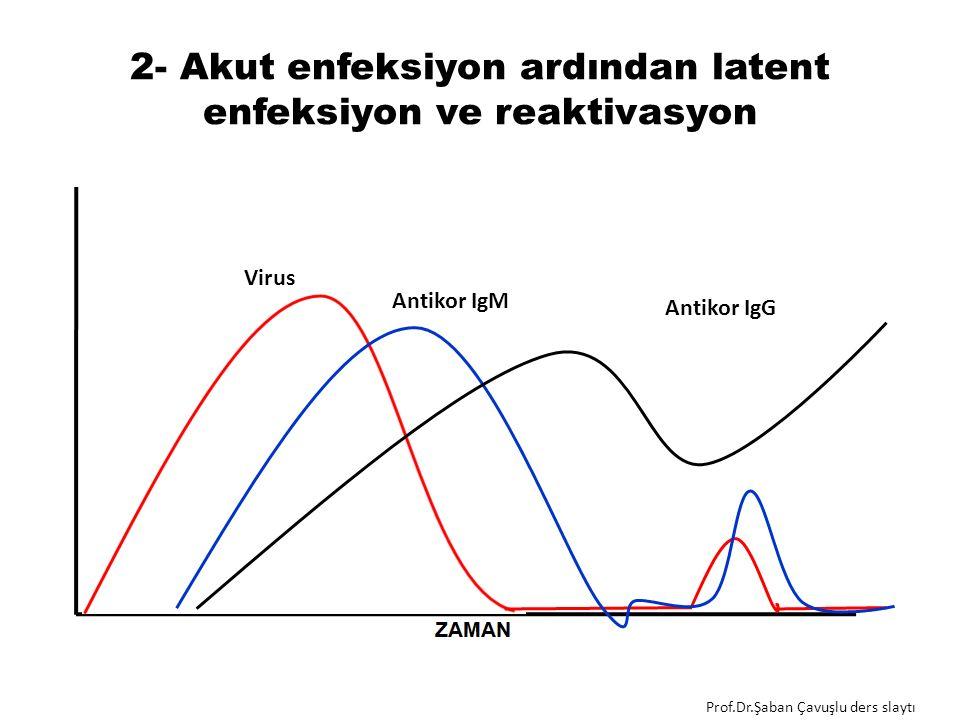2- Akut enfeksiyon ardından latent enfeksiyon ve reaktivasyon Antikor IgM Virus Antikor IgG Prof.Dr.Şaban Çavuşlu ders slaytı