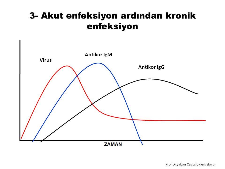 3- Akut enfeksiyon ardından kronik enfeksiyon Antikor IgM Virus Antikor IgG Prof.Dr.Şaban Çavuşlu ders slaytı