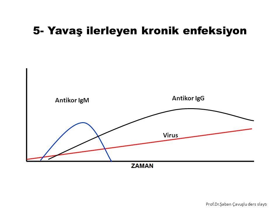 5- Yavaş ilerleyen kronik enfeksiyon Antikor IgM Virus Antikor IgG Prof.Dr.Şaban Çavuşlu ders slaytı