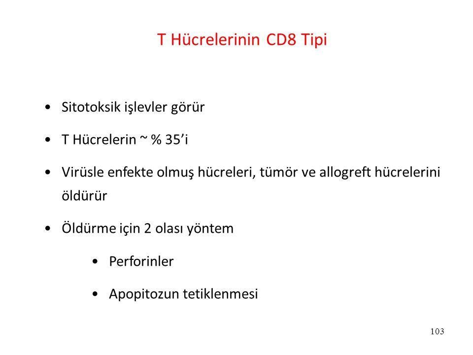 103 T Hücrelerinin CD8 Tipi Sitotoksik işlevler görür T Hücrelerin ~ % 35'i Virüsle enfekte olmuş hücreleri, tümör ve allogreft hücrelerini öldürür Öl