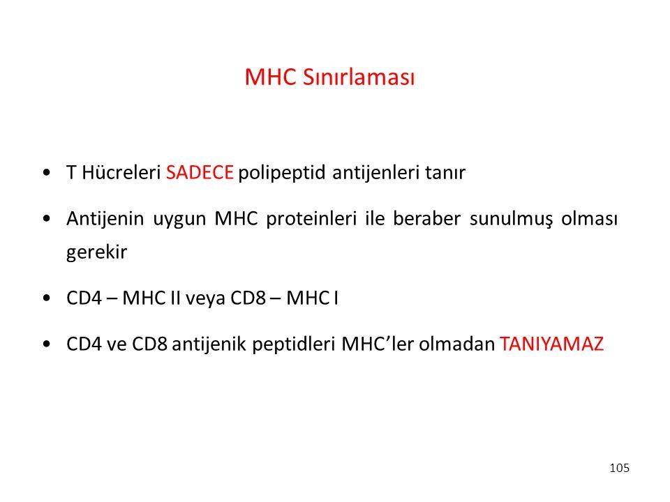 105 MHC Sınırlaması T Hücreleri SADECE polipeptid antijenleri tanır Antijenin uygun MHC proteinleri ile beraber sunulmuş olması gerekir CD4 – MHC II v
