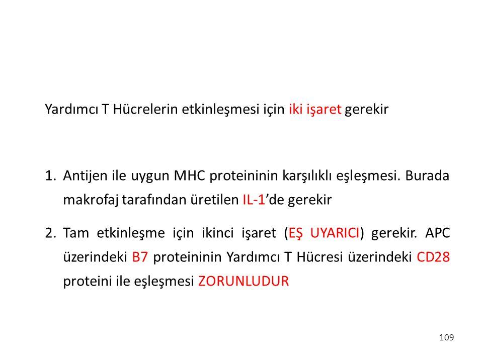 109 Yardımcı T Hücrelerin etkinleşmesi için iki işaret gerekir 1.Antijen ile uygun MHC proteininin karşılıklı eşleşmesi. Burada makrofaj tarafından ür