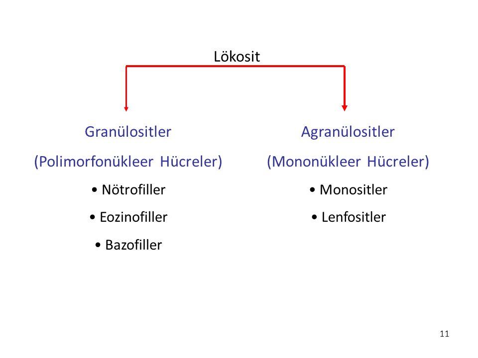 11 Lökosit Granülositler (Polimorfonükleer Hücreler) Nötrofiller Eozinofiller Bazofiller Agranülositler (Mononükleer Hücreler) Monositler Lenfositler