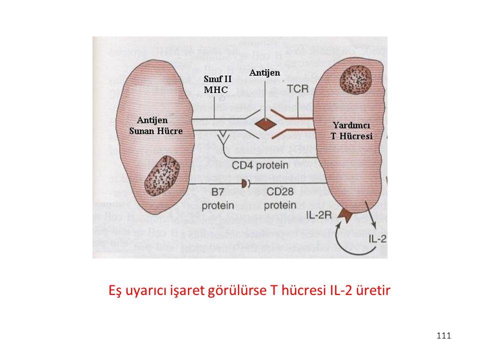 111 Eş uyarıcı işaret görülürse T hücresi IL-2 üretir