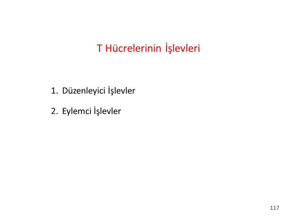 117 T Hücrelerinin İşlevleri 1.Düzenleyici İşlevler 2.Eylemci İşlevler