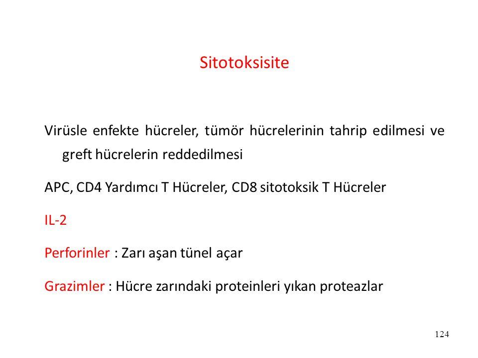 124 Sitotoksisite Virüsle enfekte hücreler, tümör hücrelerinin tahrip edilmesi ve greft hücrelerin reddedilmesi APC, CD4 Yardımcı T Hücreler, CD8 sito