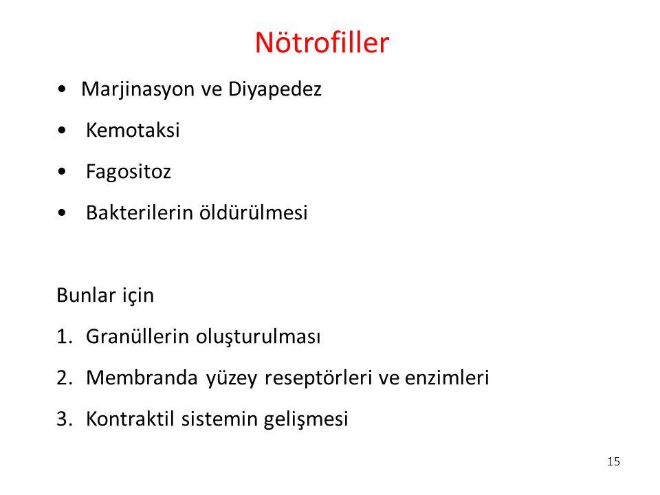 15 Nötrofiller Marjinasyon ve Diyapedez Kemotaksi Fagositoz Bakterilerin öldürülmesi Bunlar için 1. Granüllerin oluşturulması 2. Membranda yüzey resep