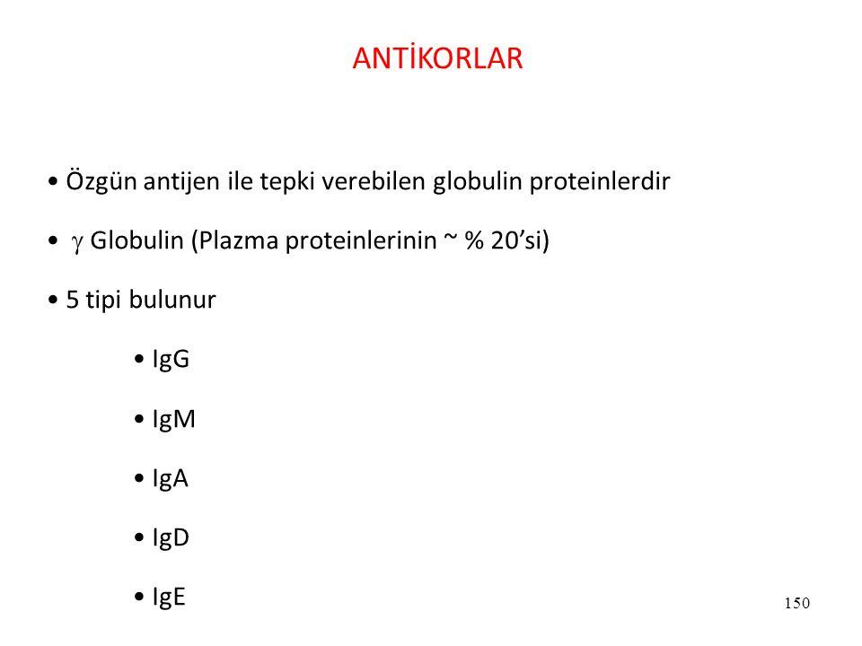 150 ANTİKORLAR Özgün antijen ile tepki verebilen globulin proteinlerdir  Globulin (Plazma proteinlerinin ~ % 20'si) 5 tipi bulunur IgG IgM IgA IgD Ig