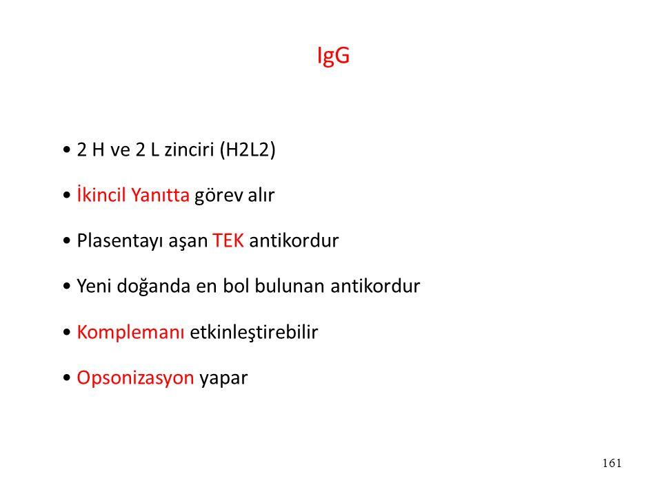 161 IgG 2 H ve 2 L zinciri (H2L2) İkincil Yanıtta görev alır Plasentayı aşan TEK antikordur Yeni doğanda en bol bulunan antikordur Komplemanı etkinleş