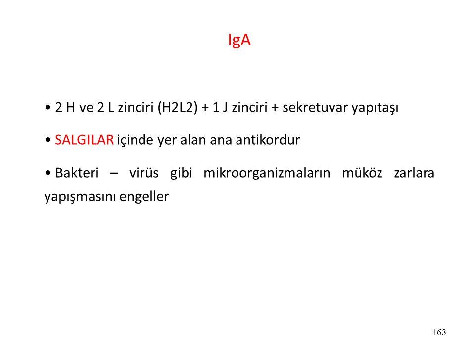 163 IgA 2 H ve 2 L zinciri (H2L2) + 1 J zinciri + sekretuvar yapıtaşı SALGILAR içinde yer alan ana antikordur Bakteri – virüs gibi mikroorganizmaların