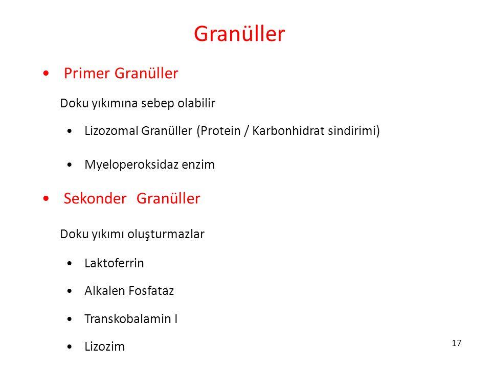 17 Granüller Primer Granüller Doku yıkımına sebep olabilir Lizozomal Granüller (Protein / Karbonhidrat sindirimi) Myeloperoksidaz enzim Sekonder Granü