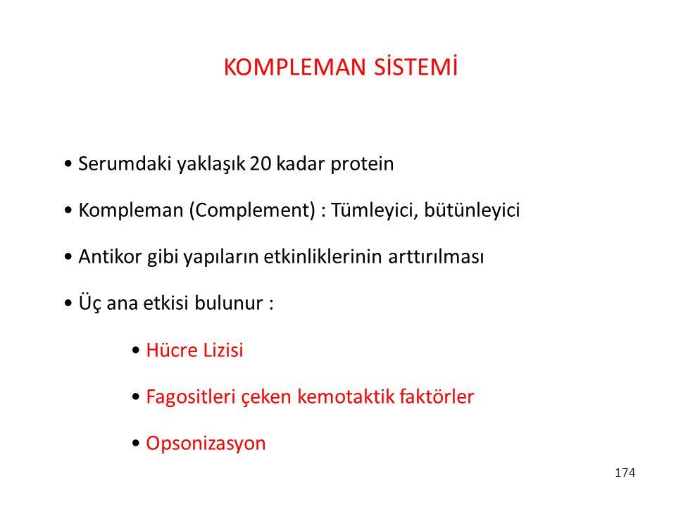 174 KOMPLEMAN SİSTEMİ Serumdaki yaklaşık 20 kadar protein Kompleman (Complement) : Tümleyici, bütünleyici Antikor gibi yapıların etkinliklerinin arttı