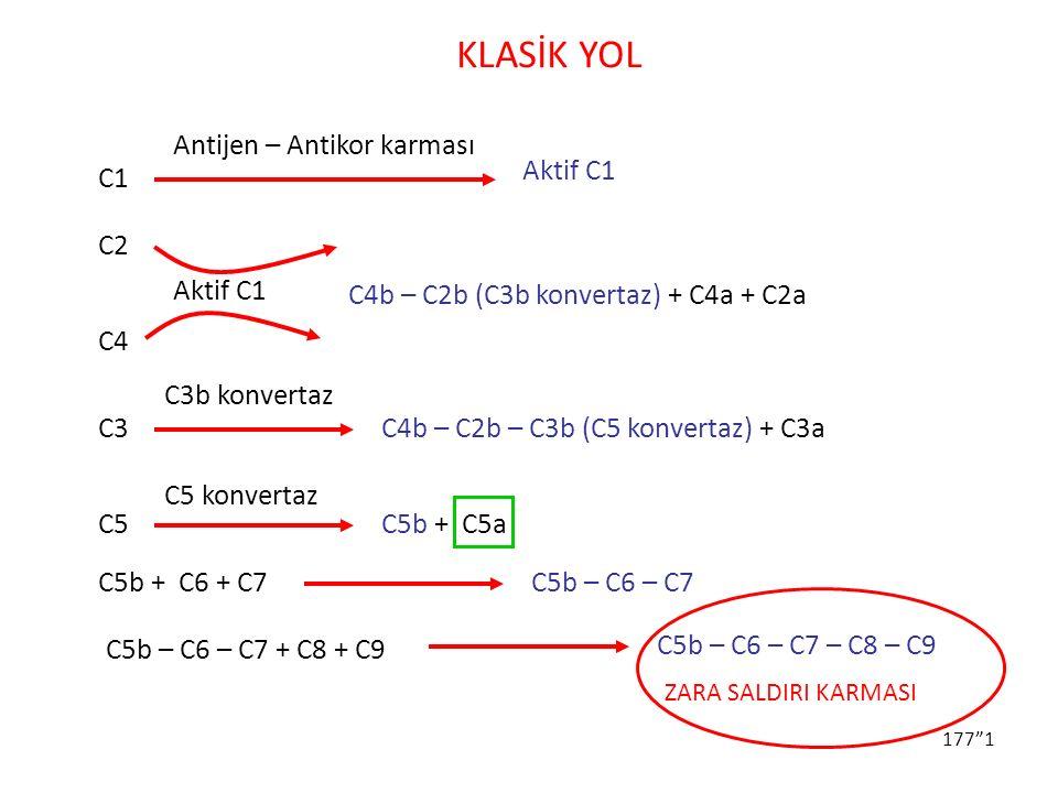 """177""""1 KLASİK YOL Antijen – Antikor karması C1 Aktif C1 C2 C4 C4b – C2b (C3b konvertaz) + C4a + C2a C3 C4b – C2b – C3b (C5 konvertaz) + C3a C3b konvert"""