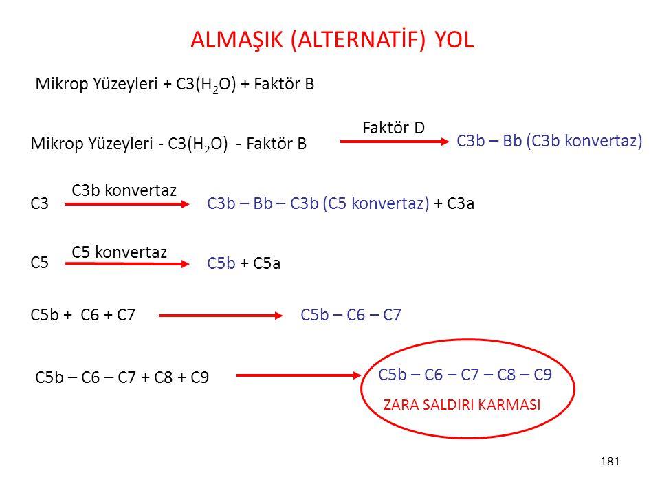 181 Mikrop Yüzeyleri + C3(H 2 O) + Faktör B C3 C3b – Bb – C3b (C5 konvertaz) + C3a C3b konvertaz C5 C5b + C5a C5 konvertaz C5b + C6 + C7 C5b – C6 – C7