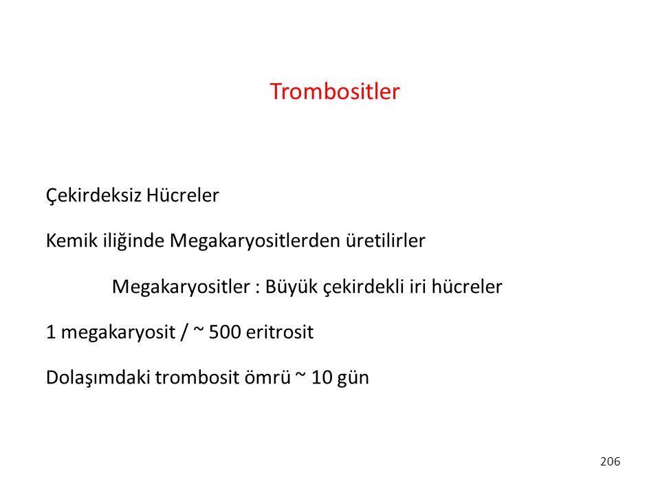 206 Trombositler Çekirdeksiz Hücreler Kemik iliğinde Megakaryositlerden üretilirler Megakaryositler : Büyük çekirdekli iri hücreler 1 megakaryosit / ~